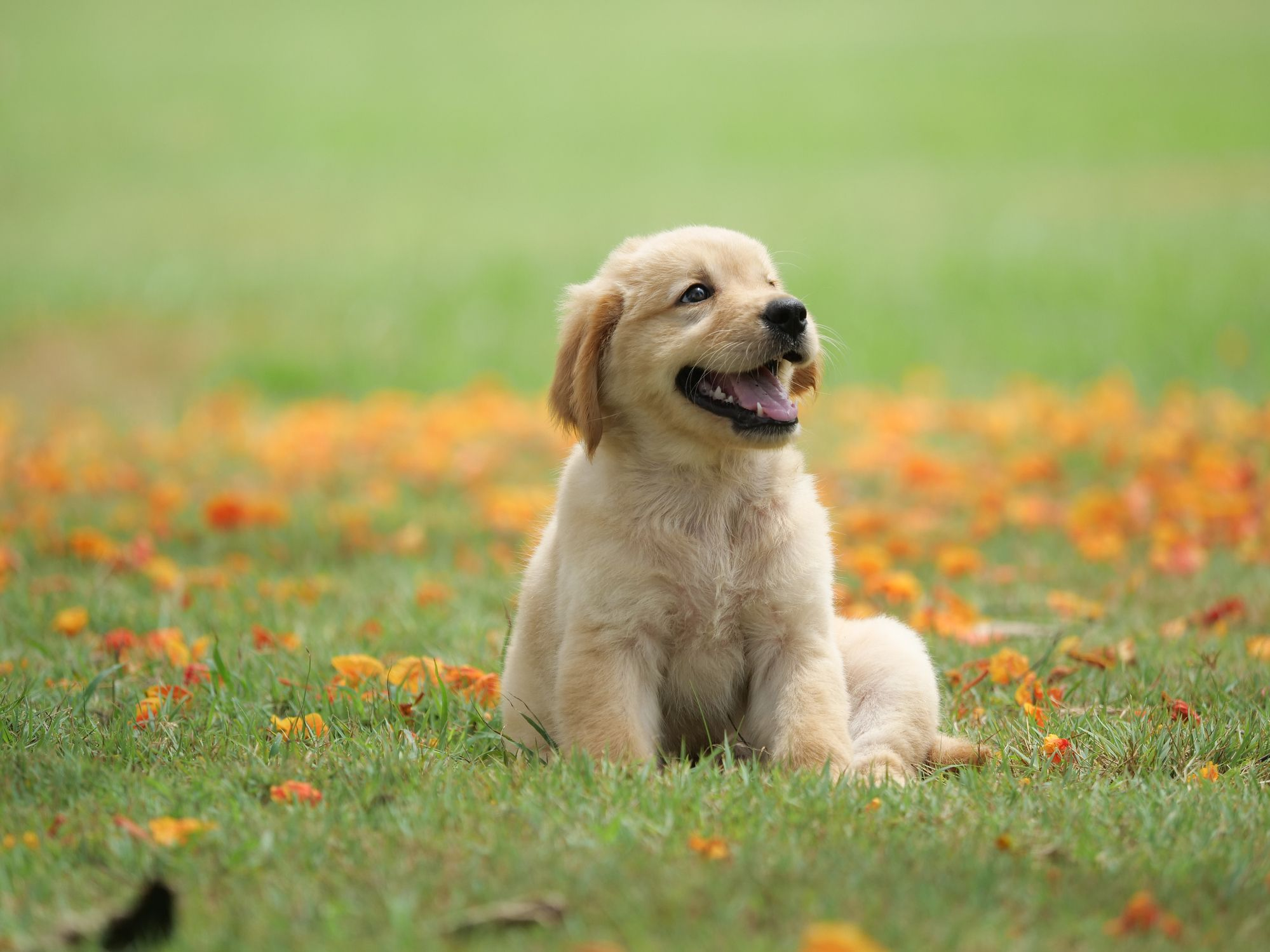 The 25 Cutest Dog Breeds - Most Adorable Dogs and Puppies
