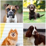 5 Of The Best Dog Breeds If You Are Outgoing