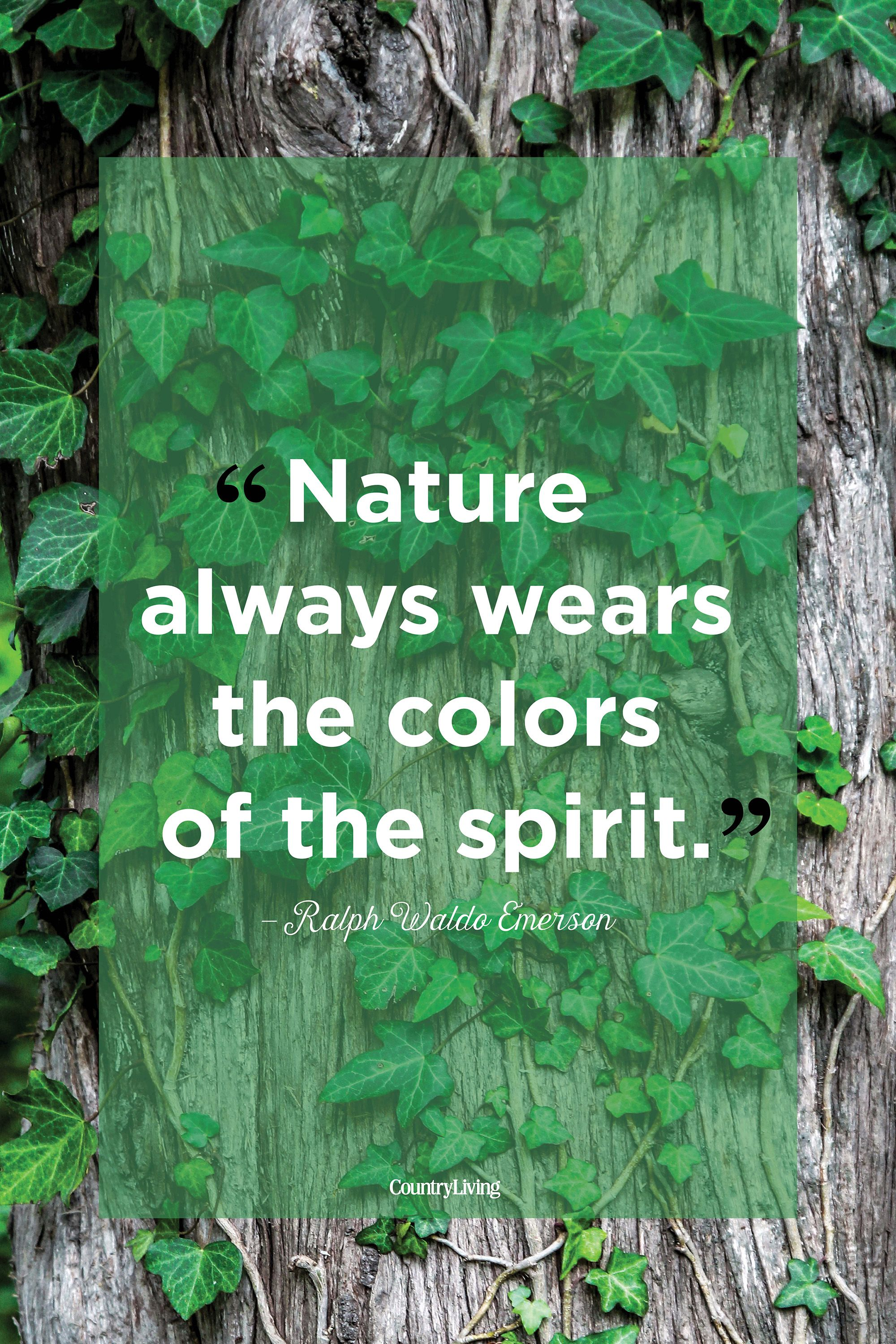 Nature Beauty Sayings and Nature Beauty Quotes | Wise Sayings