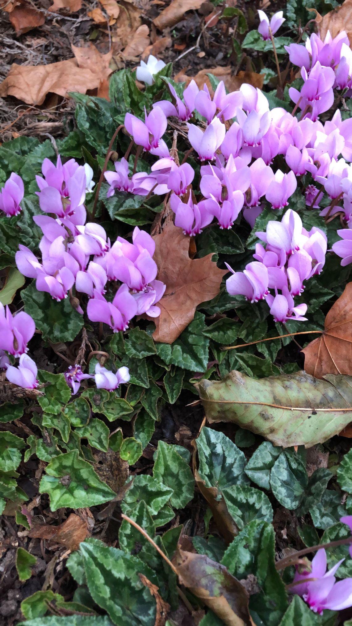 30 Best Fall Flowers To Plant Pretty Fall Plants Flowering Perennials