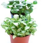 34 Houseplants That Can Survive Low Light Best Indoor Low Light Plants