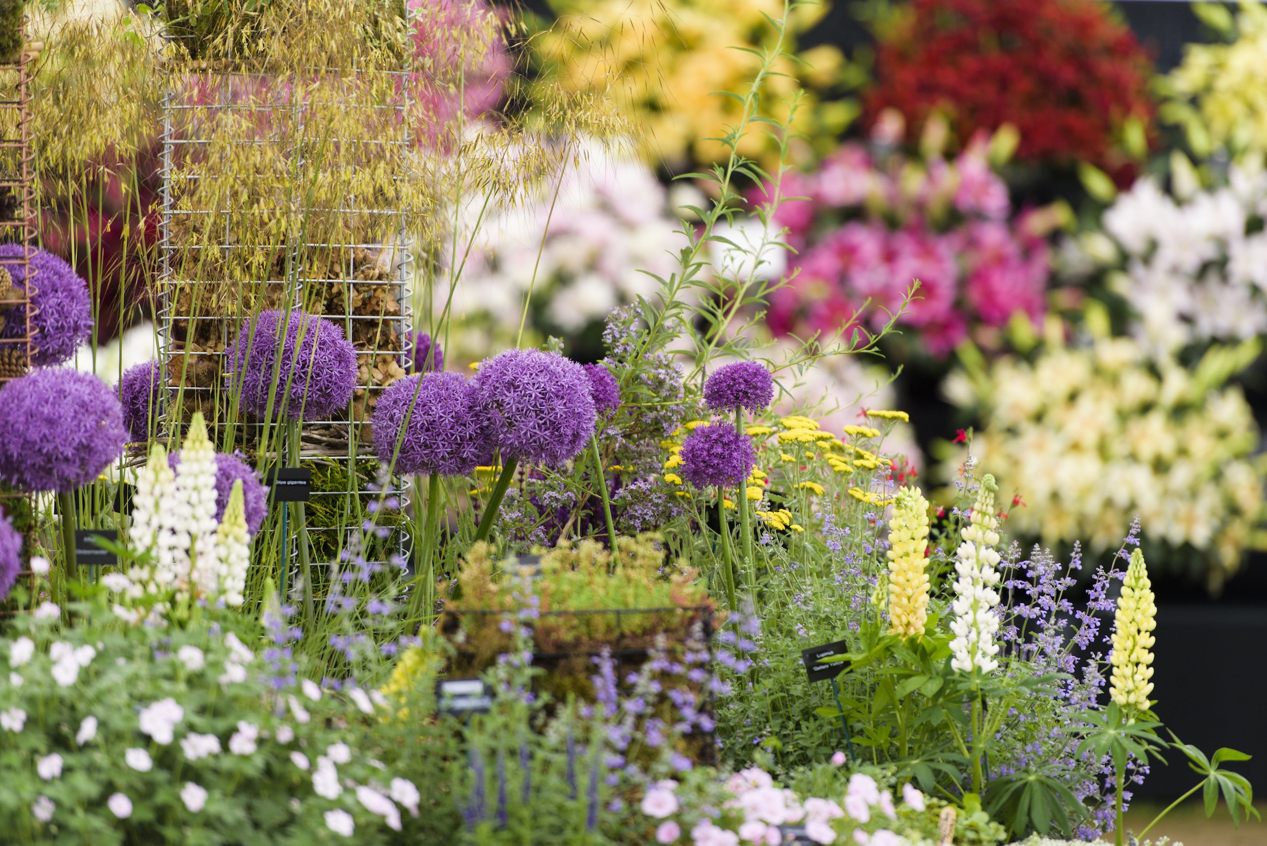 Chatsworth Flower Show 2019  RHS Chatsworth Tickets