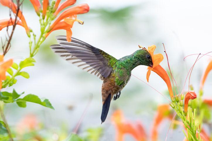 14 Flowers That Attract Hummingbirds Best Blooms For Pollinators