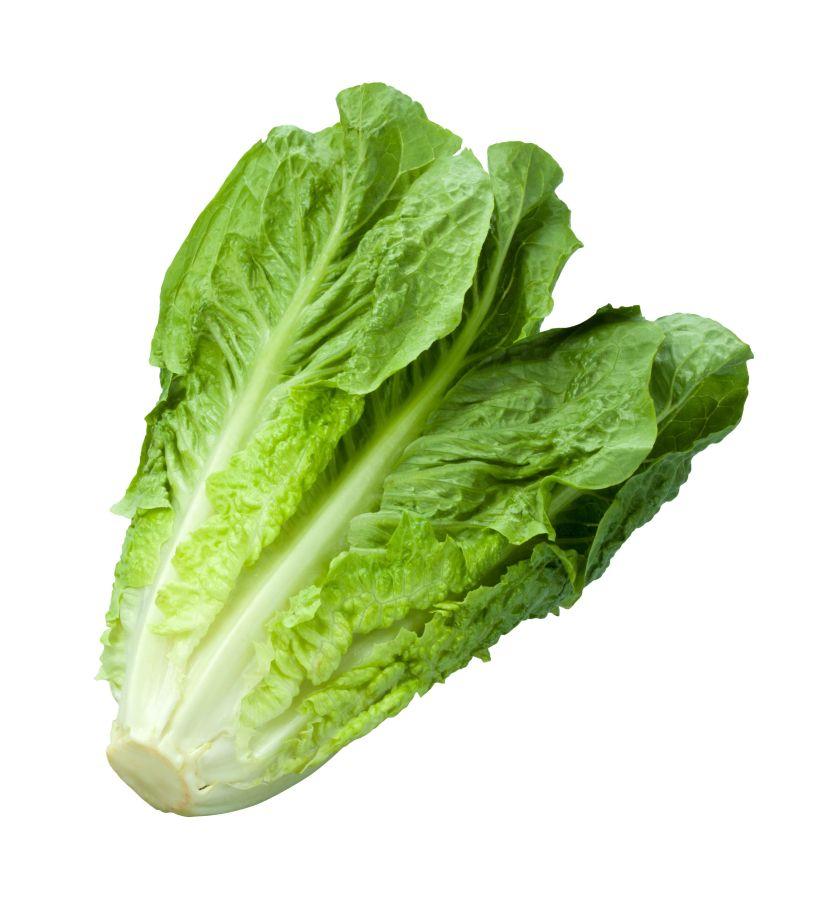 Fresh bunch of romaine lettuce isolated on white background