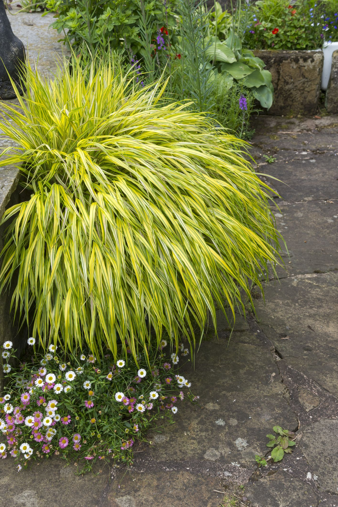 the 20 best patio plants to make your