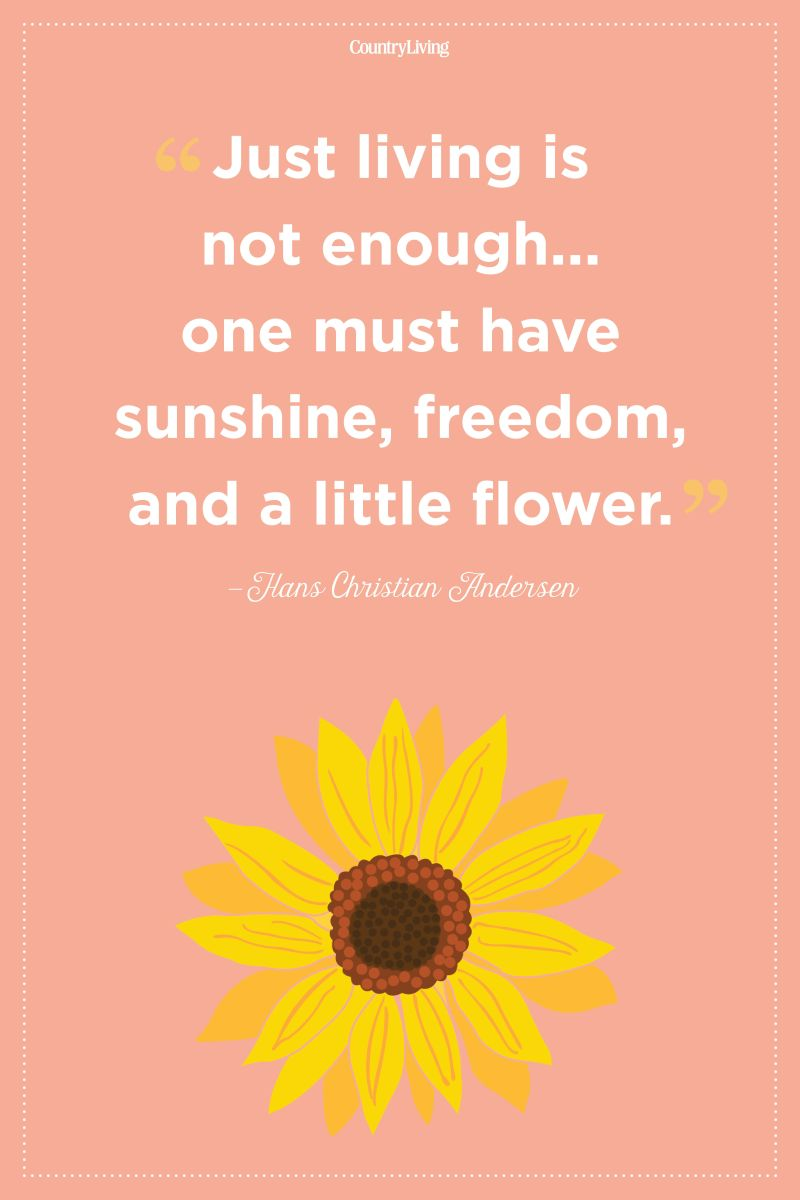 Flower Will Bloom Quotes Classy World