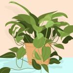 Golden Pothos Is The Best Indoor Houseplant To Grow Because It Refuses To Die