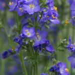 15 Best Shade Perennials Shade Loving Perennial Flowers And Plants