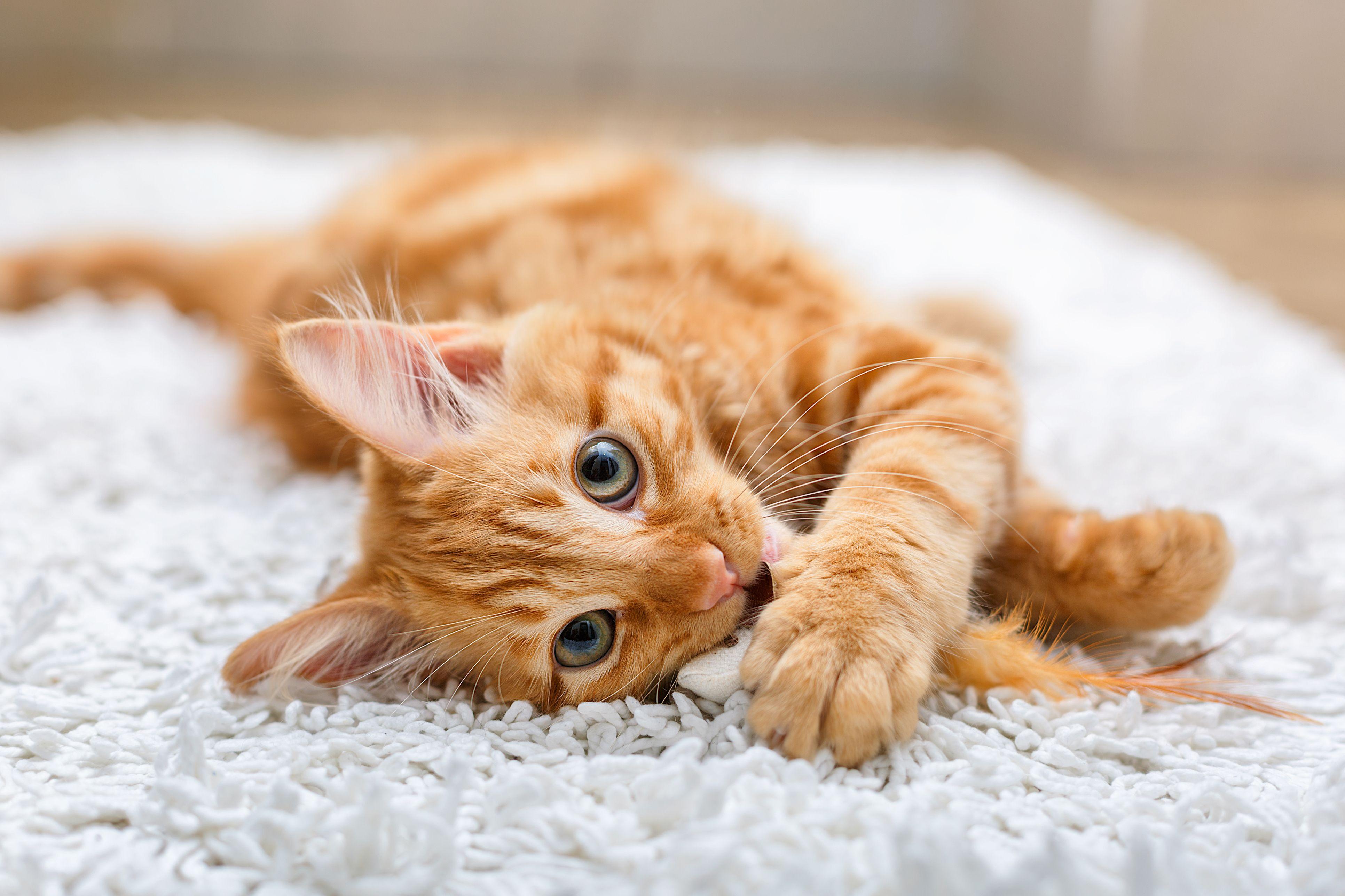 50 cute cat names