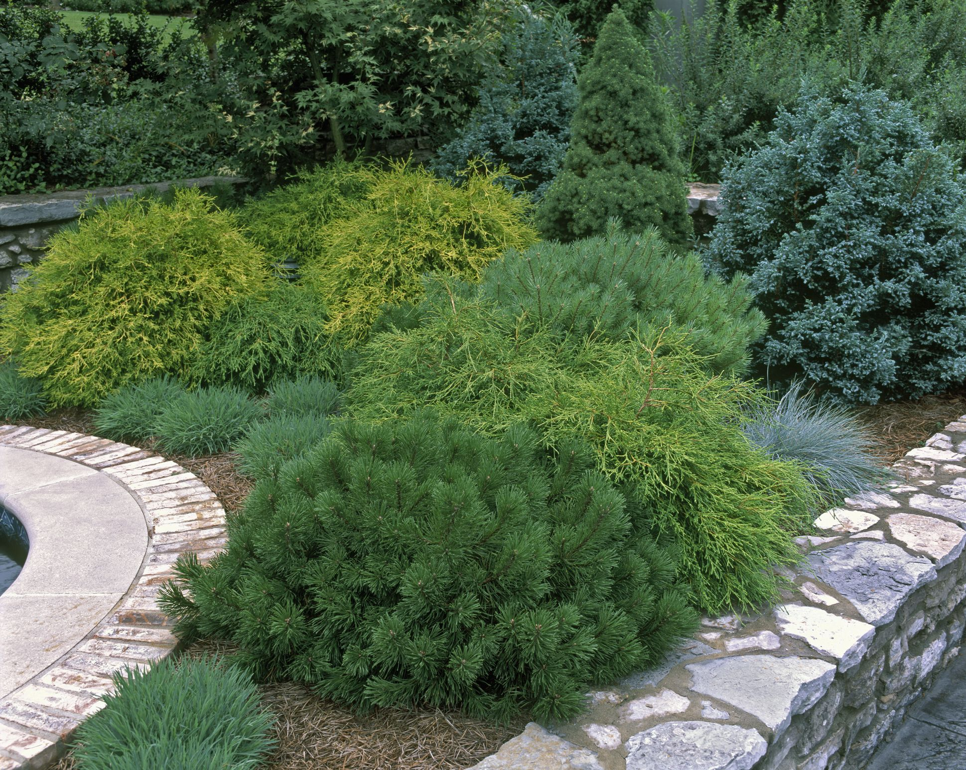 essential evergreen shrubs