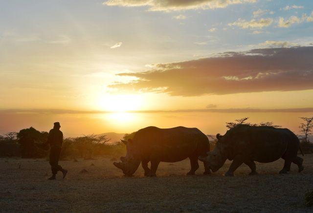 KENYA-ENVIRONMENT-POACHING-WILDLIFE-RHINOS