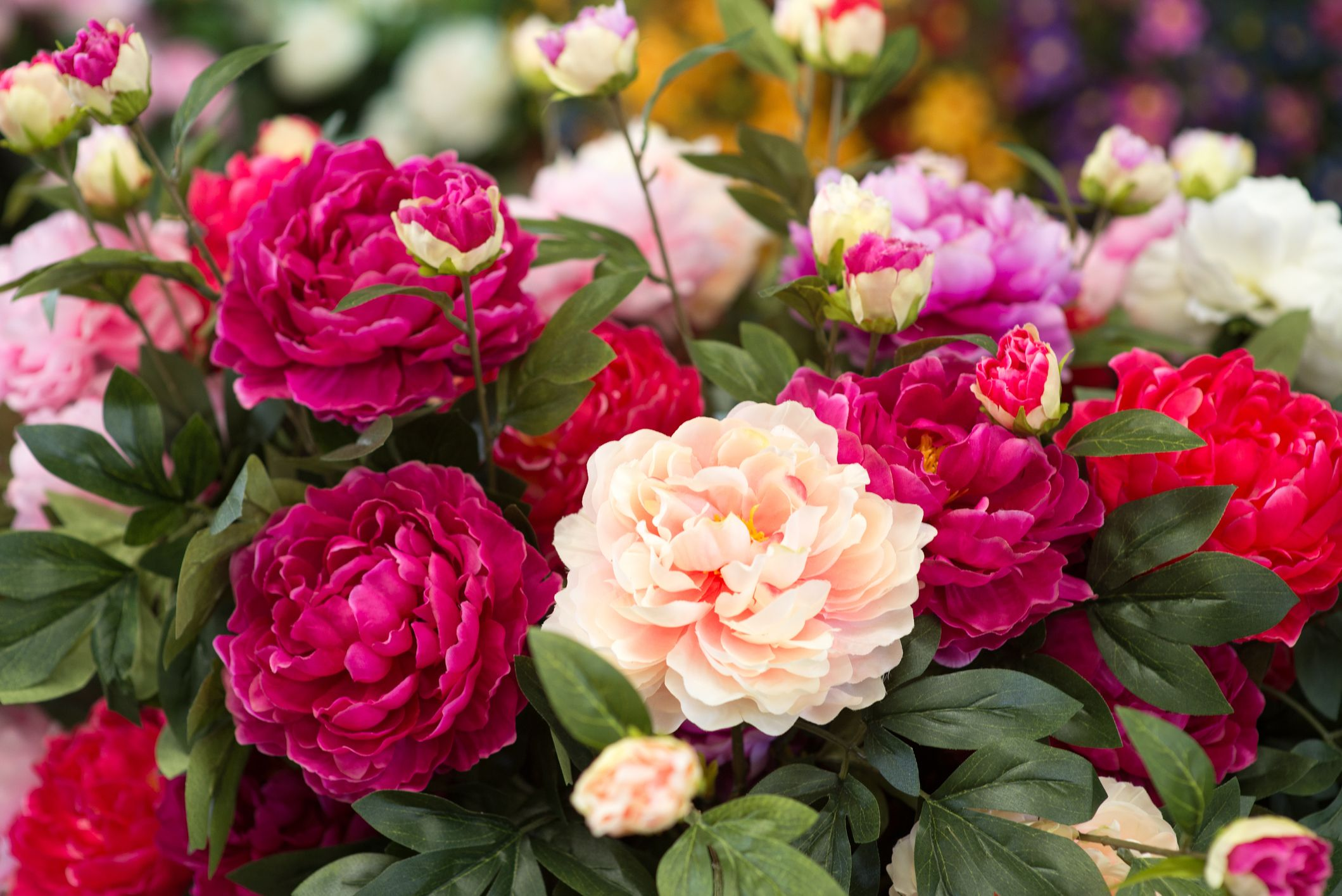 40 flowers with surprising
