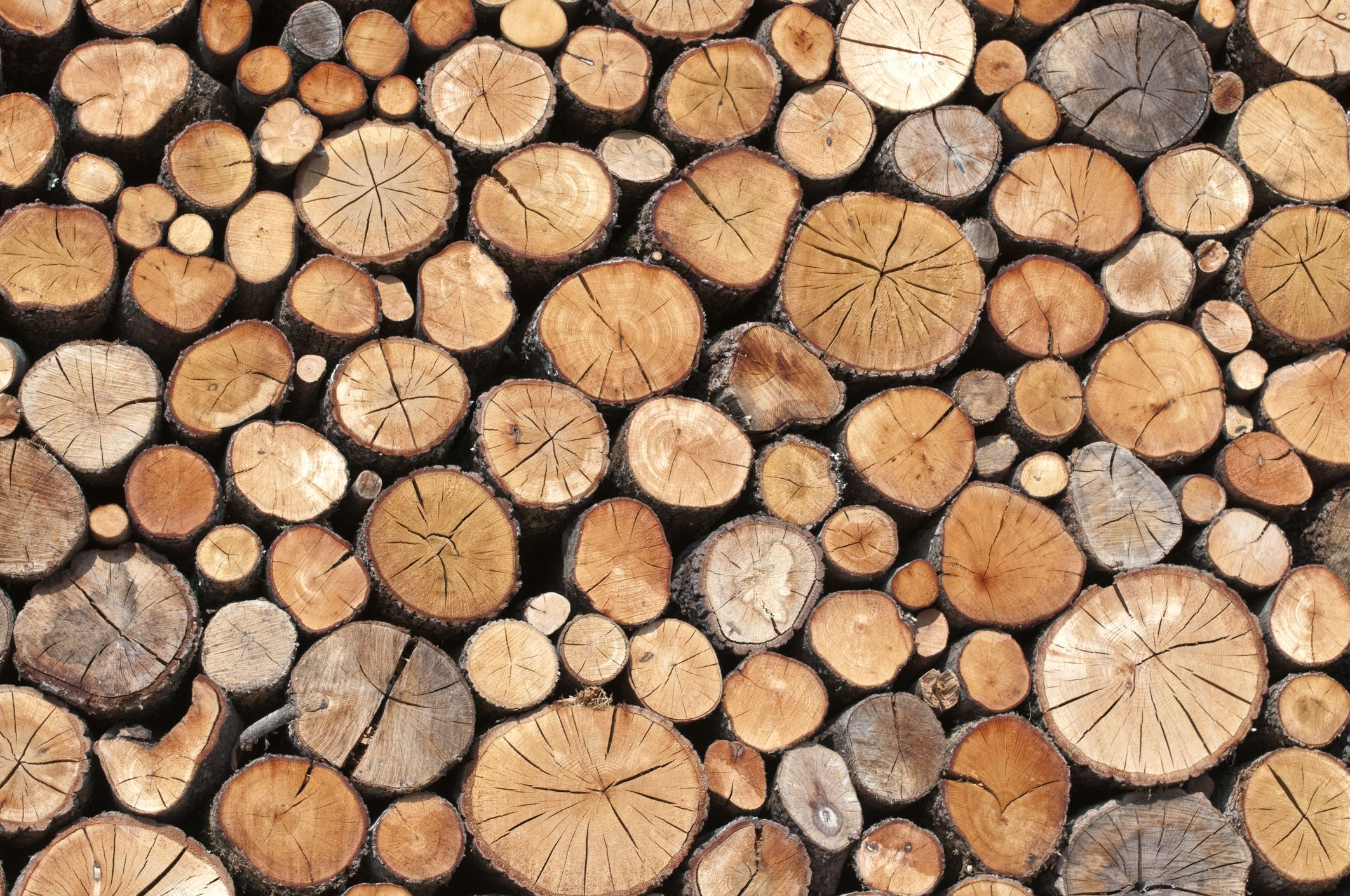 8 Kinds of Wood You Not to Burn  Bad Firewood You Should Never Use
