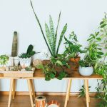 23 Best Small Indoor House Plants Easy House Plants For Beginners