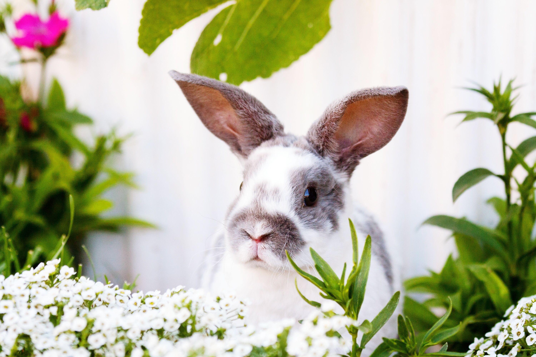 the 15 best rabbit