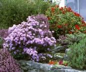 best flowering shrubs