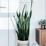 25 Best Indoor Plants Easy Indoor Gardening Ideas