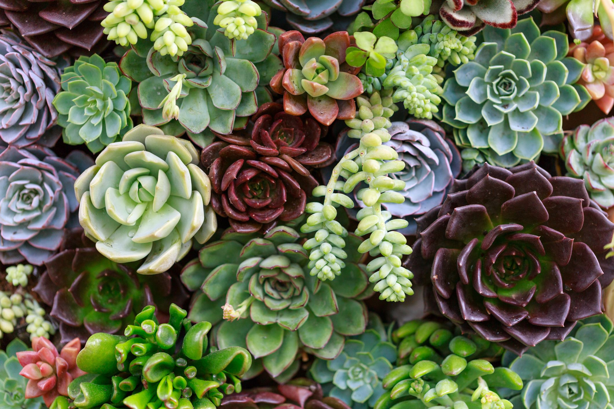 Fall Succulent Wallpaper 5 Mistakes You Re Making With Your Succulents Growing