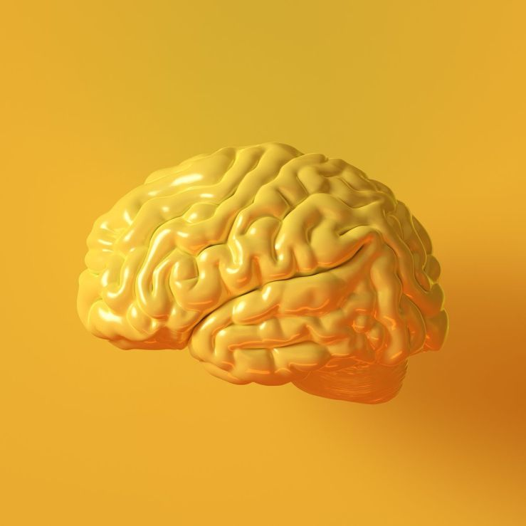 Yellow Human brain Anatomical Model