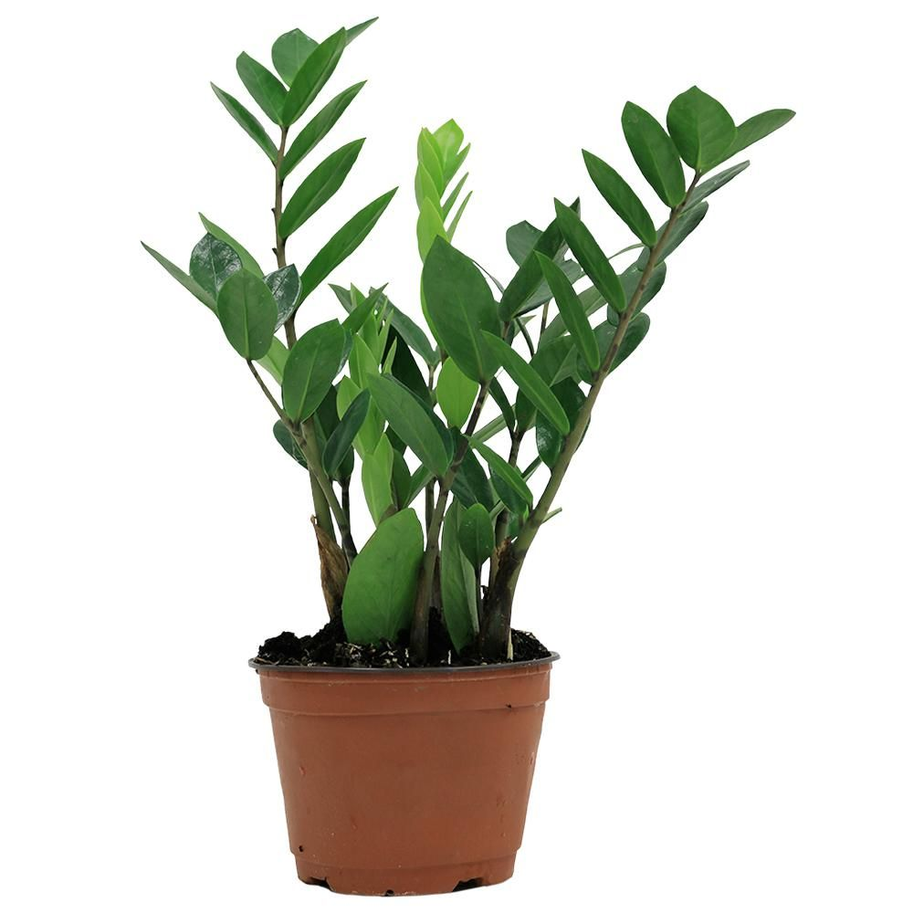 30 Best Indoor Plants For Apartments Best Houseplants For City Dwellers