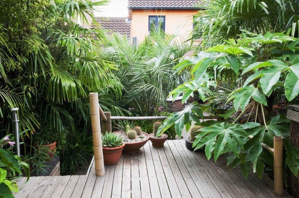 tropical plants grow