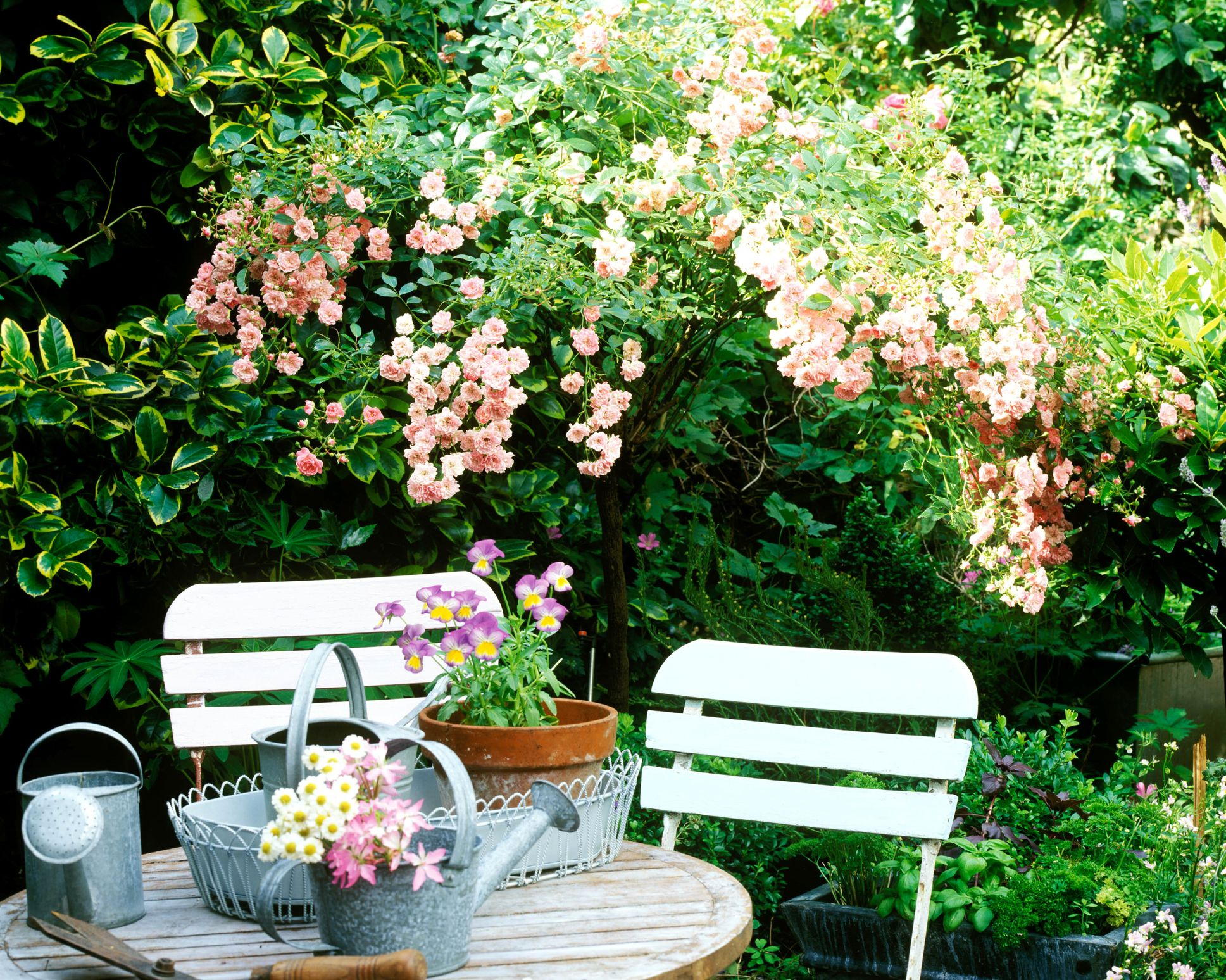 20 Easy Small Privacy Fence Designs For Your Yard Gardening