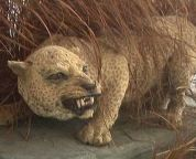11 extinct animals lost species disappeared for good