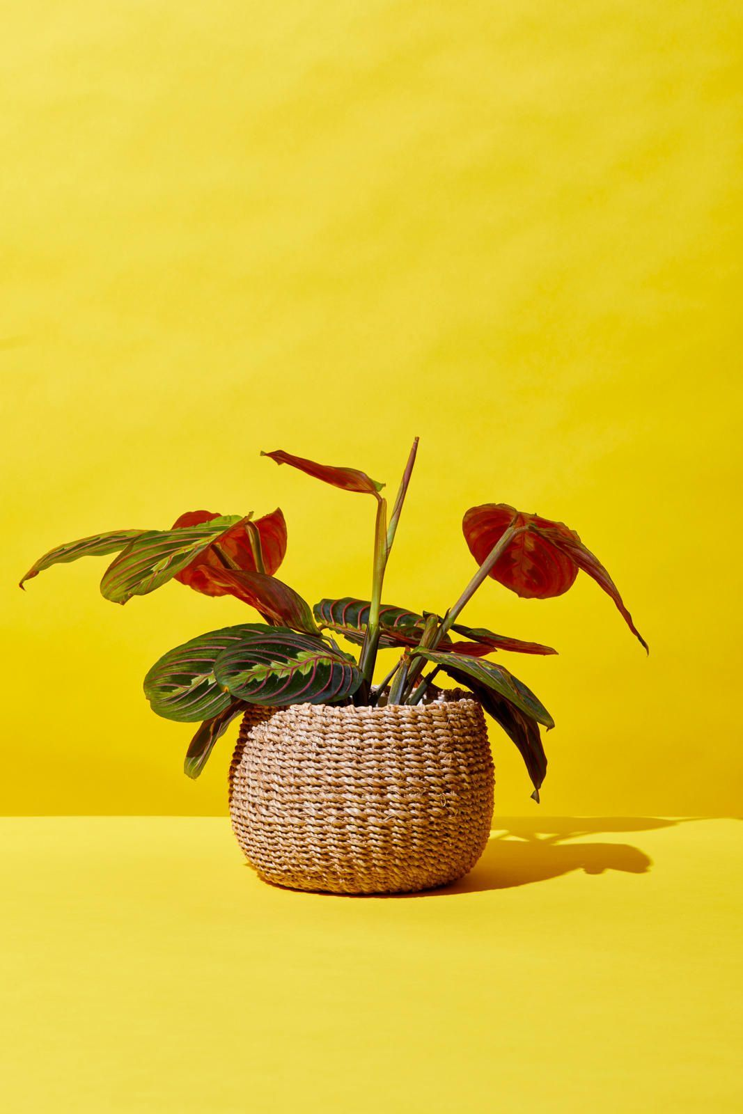 The Best Places To Buy Plants Online Cheap Indoor Plants To Order