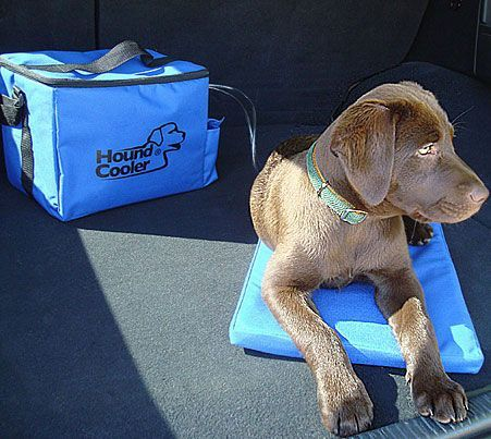 8 best cooling dog beds of 2021 cool