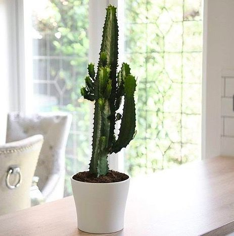 Best House Plants To Buy Online Buy Plants Online