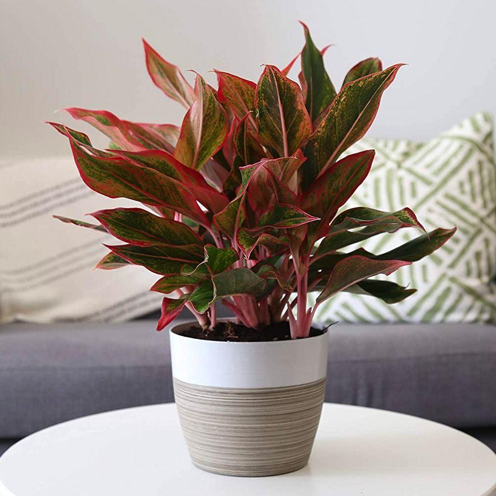 12 Best Low Light Plants Low Light Indoor And Outdoor Houseplants