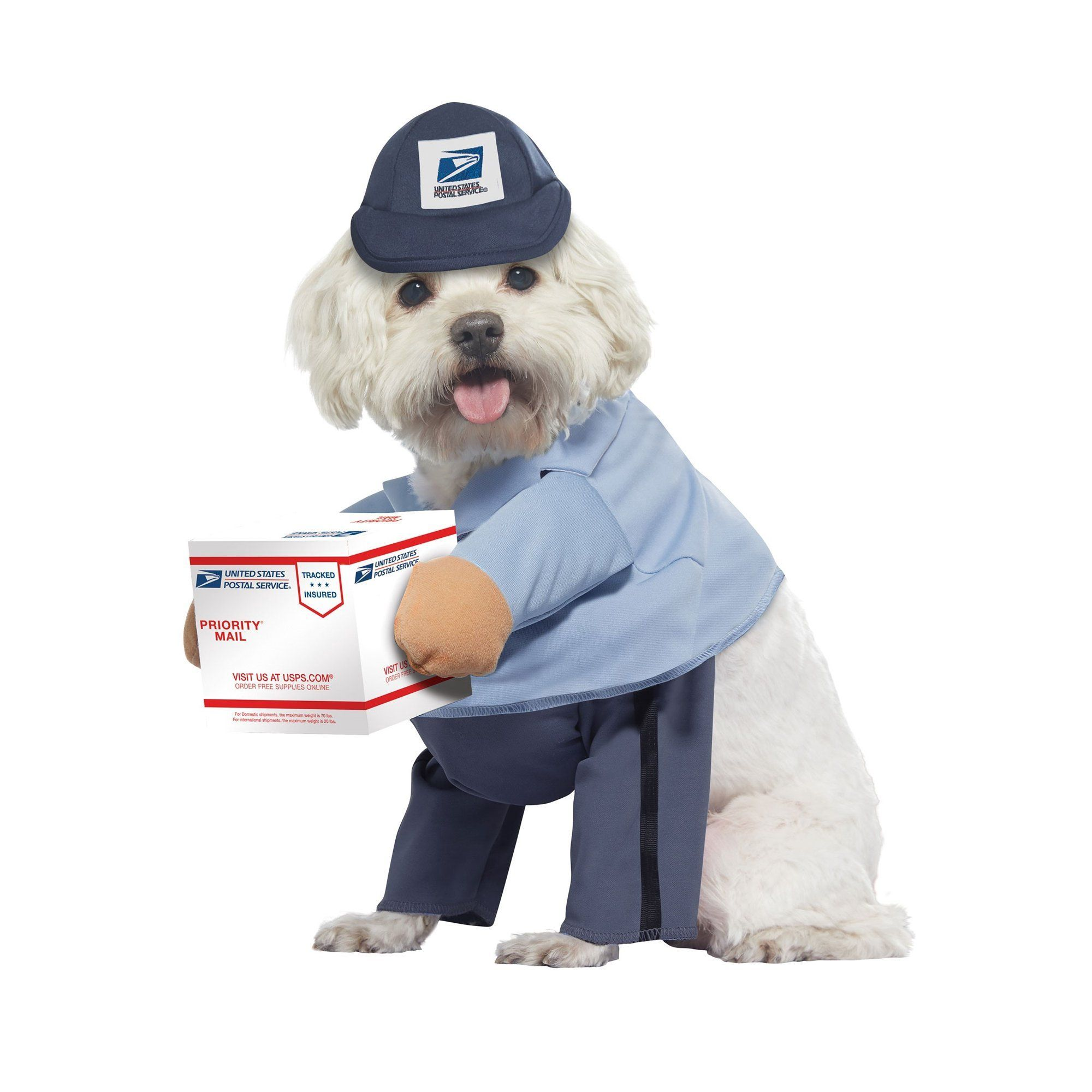 There are some traditional games like bobbing for apples and smashing a piñata that can easily. 50 Best Dog Halloween Costumes 2021 Funny Cute Dog Costume Ideas