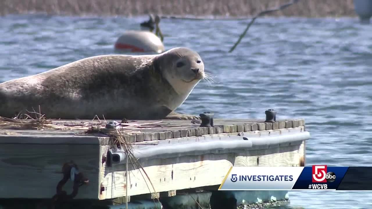 can controlling the seal