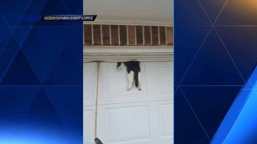 Louisiana sheriffs deputy rescues cat stuck between