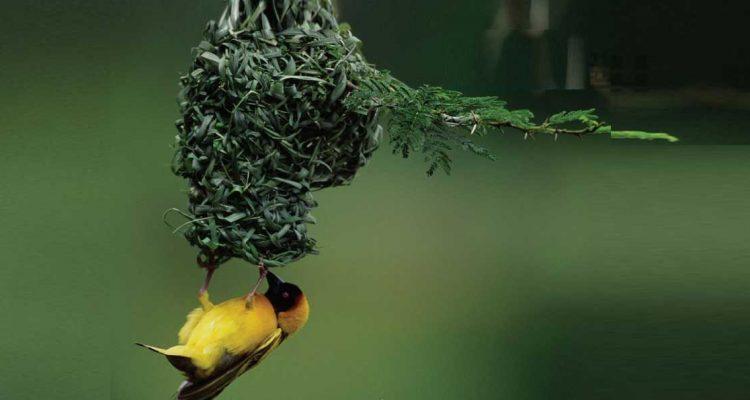 التكافل والتعايش بين النبات والحيوان موقع مجلة حراء مجلة