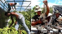 New 'Chiquita Papers' Expose How Banana Execs Fueled War and Terror in Colombia for Decades