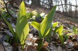 Survival 101: The Right Way To Determine If A Plant Is Edible