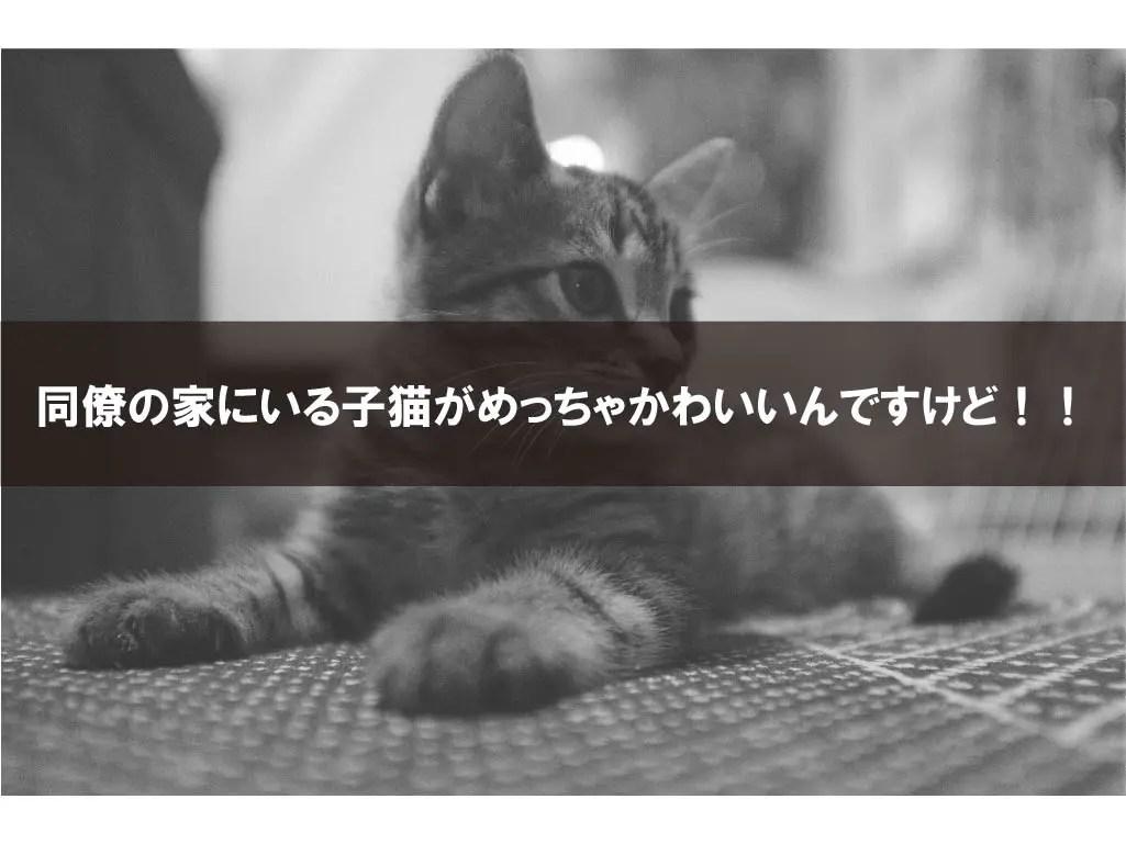 同僚の家にいる子猫がめっちゃかわいいんですけど!!