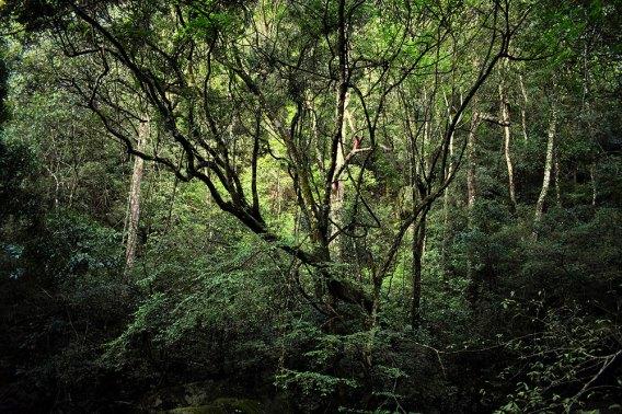 sinharaja-lowland-rain-forest