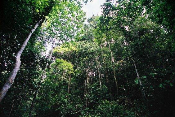 Sri Lankan Tropical Rain Forest Profile
