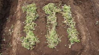 ファミリー菜園広場にほうれん草とネギ植えてきた