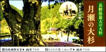 信州そば街道月瀬の大杉宣伝