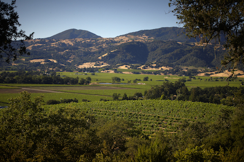 Alexander Valley, in the heart of Sonoma County