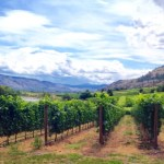 5 Reasons to Watch Maverick Estate Winery