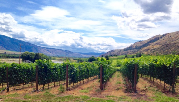 Maverick enjoys impressive views of the South Okanagan