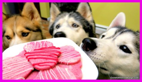 Gone to the Snow Dogs cookies