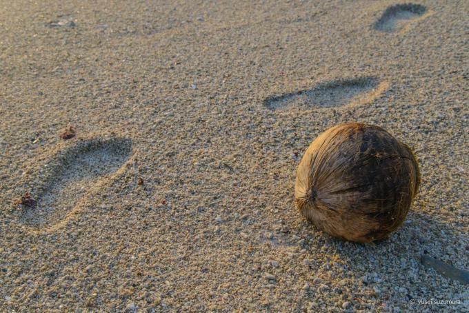 ヒズシビーチのヤシの実