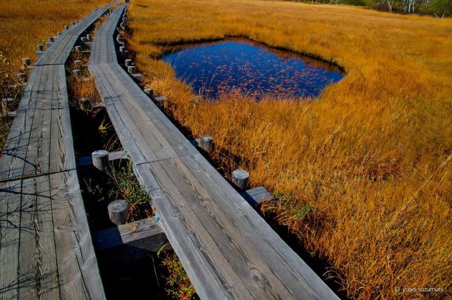 尾瀬の池塘と木道