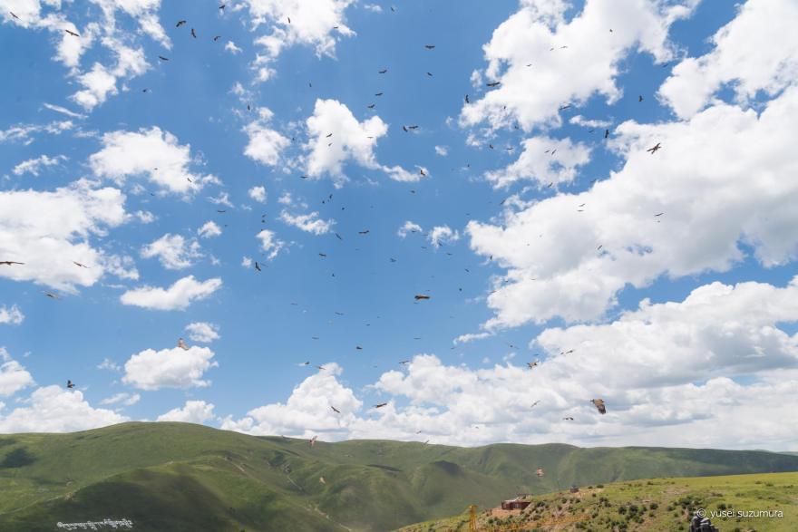 ハゲワシ 鳥葬エリア