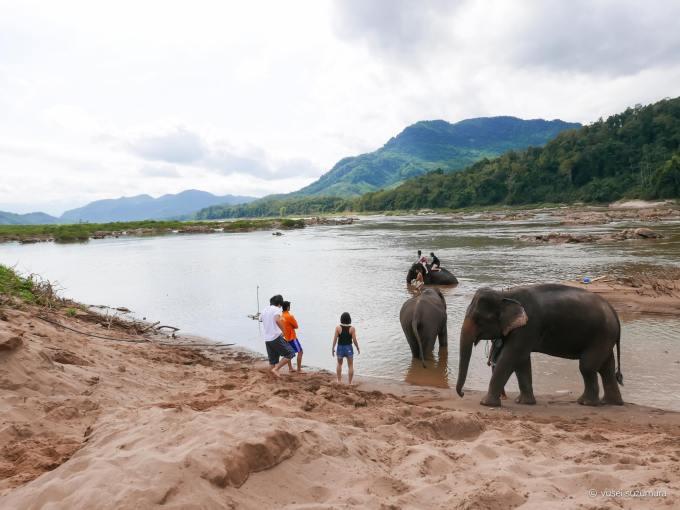 象使い ラオス 水浴び